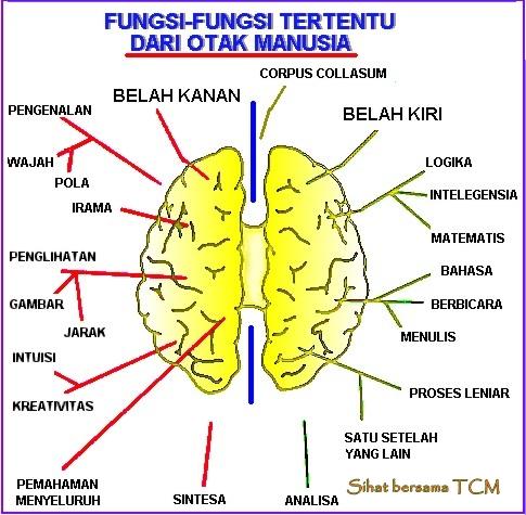 fungsi-otak-kanan
