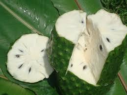 durian belanda 2