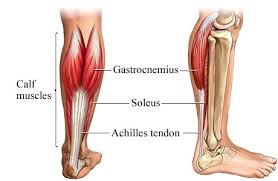 tendon1