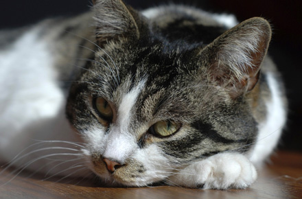 Stop-and-Prevent-Cat-Diarrhea